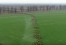 Migracja jeleni na niespotykaną skalę na Węgrzech [VIDEO]