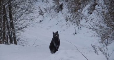 """Leśniczy z Podkarpacia rozmawiał z niedźwiedziem. """"Grzesiu, czego ty jeszcze nie śpisz?"""""""
