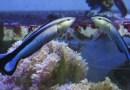"""Ryba przeszła """"test lustra"""", określający istnienie samoświadomości"""