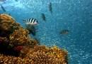 """Naukowcy """"zachwyceni"""" doniesieniami o wielkiej regeneracji raf koralowych na Hawajach"""