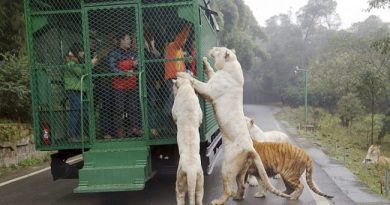 Zoo w Chinach zamyka odwiedzających w klatkach, zwierzętom zaś pozwala swobodnie wędrować