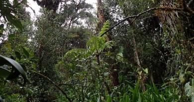 Polscy badacze chcą kupić 30 ha lasu tropikalnego w Kolumbii i utworzyć tam rezerwat przyrody