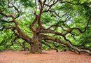 """Francja ogłosiła """"Deklarację Praw Drzewa"""""""