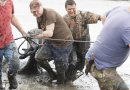 20 osób ratowało jelenie, które utknęły w błotnistej mazi nad Zalewem Szczecińskim