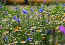 Na Ochocie w Warszawie powstaną naturalne łąki kwietne