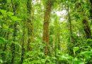 Przez ostatnie 30 lat Kostaryka podwoiła swoją powierzchnię leśną