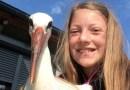 10-letnia Madzia uratowała rannego bociana. Dorośli rzucali w niego kamieniami
