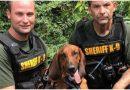 Nikt nie mógł znaleźć zaginionego chłopca, kiedy do akcji wkroczył pies, odnalazł się po 30 minutach