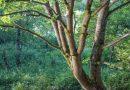 Chcą stworzyć las, w którym nie będzie można polować ani wycinać drzew. Dobre Wiadomości wspierają tę akcję!