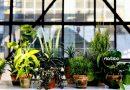 """Akcja """"Zielony Weteran"""" – emerytura dla roślin z biurowców"""