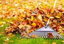 Organizacja ochrony przyrody zaleca, żeby nie zagrabiać liści