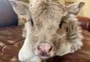 Istnieje konto na Twitterze, na którym codziennie publikowane są zdjęcia krów, powodujące uśmiech na twarzy