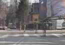W Zakopanem jest tak pusto, że dzikie zwierzęta wchodzą do centrum miasta