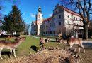 W niemodlińskim parku przy wiekowym zamku zamieszkały daniele