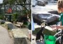 Pracownicy z własnej woli spędzają kwarantannę w brytyjskim parku dzikich zwierząt, w celu opieki nad zwierzętami