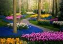 Najbardziej znany park kwiatów rozkwita bez zwiedzających
