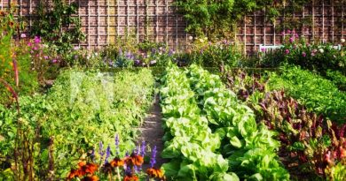Zdaniem badaczy, ogrodnictwo uszczęśliwia podobnie jak jazda na rowerze czy spacery