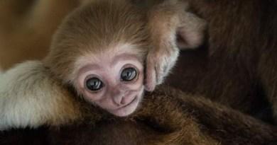 Fotograf uchwycił więź miłości między zwierzęcymi mamami a ich dziećmi