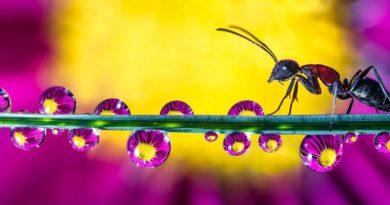 Niezwykłe zdjęcia makro kropli wody ukazują ukryte piękno przyrody [FOTO]