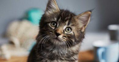 """Co myśli i czuje twój kot? Tak japoński """"zaklinacz kotów"""" mówi o relacji z wąsatym czworonogiem"""