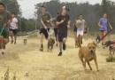 Drużyna biegaczy z liceum zabiera samotne psy ze schroniska na poranne bieganie