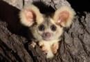 Różnorodność biologiczna Australii właśnie się wzbogaciła – odkryto dwa nowe gatunki