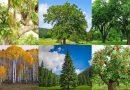 Co czeka cię w Nowym Roku? Wybierz swoje drzewo i sprawdź!
