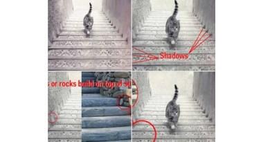 Zabawa psychologiczna z kotem – rozwiązanie zagadki – kot wchodzi czy schodzi ze schodów?