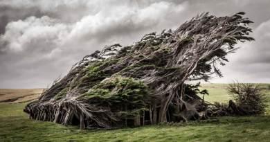 Slope Point to najdalej na południe wysunięty punkt Nowej Zelandii, którego sława przyciąga turystów z całego świata. Wszystko za sprawą dziwnie rosnących drzew, które tworzą nietypowe zjawisko przyrodnicze.