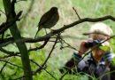 Ornitologia dla zestresowanych. Skuteczna jak terapia