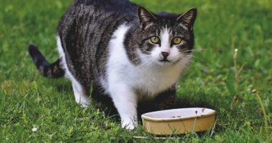 Pokarm dla kota – na co zwrócić szczególną uwagę?