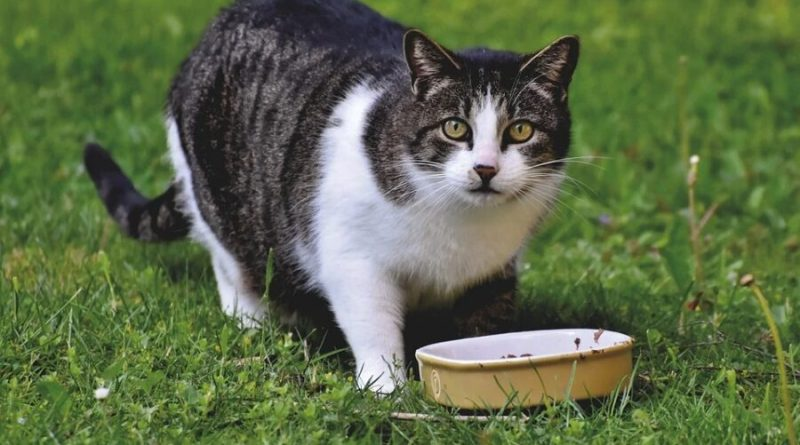 Pokarm dla kota