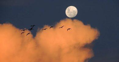 Księżyca