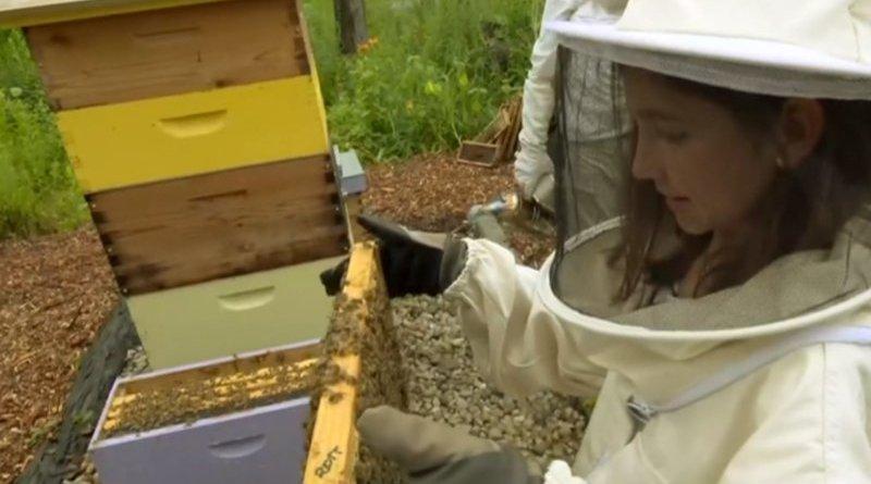 ratowania pszczół