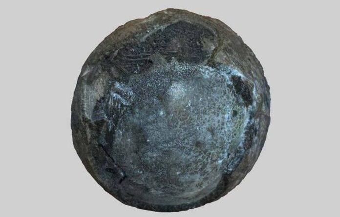 skamieniałe jajo