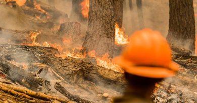 Strażacy owijają gigantyczne sekwoje ognioodpornymi kocami i ratują je przed pożarem