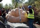 Opolskie. Największa dynia w Polsce ważyła 848,5 kg, wyhodował ją programista