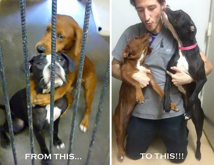 shelter dogs hug photo viral save life euthanasia kala keira angels among us 5