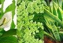 Zadbaj, aby w Twoim domu były rośliny oczyszczające powietrze
