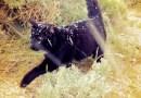 Adoptował bezdomnego kota, teraz podróżuje z nim po najdalszych zakątkach świata