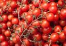 Pomidory działają zbawiennie na ludzki układ krwionośny