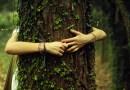 Dendroterapia, czyli jak przyjąć pozytywną energię z drzew