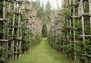 Niesamowita katedra zbudowana z drzew