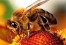 8 niesamowitych faktów o pszczołach, których prawdopodobnie nie znacie