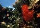 Wokół wysp Pitcairn powstanie ogromny morski rezerwat przyrody