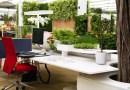 """Rośliny w biurze mogą podnosić produktywność pracowników nawet o 15 proc. """"To znak, że firma o nich dba""""."""