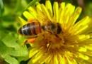 Oslo buduje pierwszą na świecie autostradę dla pszczół
