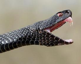 Если укусила змея. Первая помощь при укусе змеи