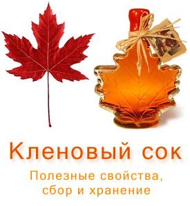 Кленовый сок. Полезные свойства, добыча и хранение кленового сока