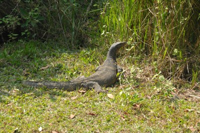 120116_Khao Yai National Park_Tajlandia (110)